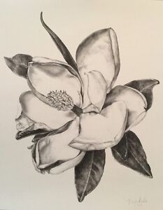 Details About Magnolia Flower Print From Original Pencil Graphite Drawing 11x14