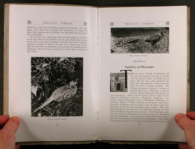 Pheasant Farming - Eugene Simpson 1914 Game Bird Farm Raising