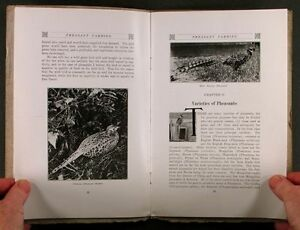 Pheasant-Farming-Eugene-Simpson-1914-Game-Bird-Farm-Raising