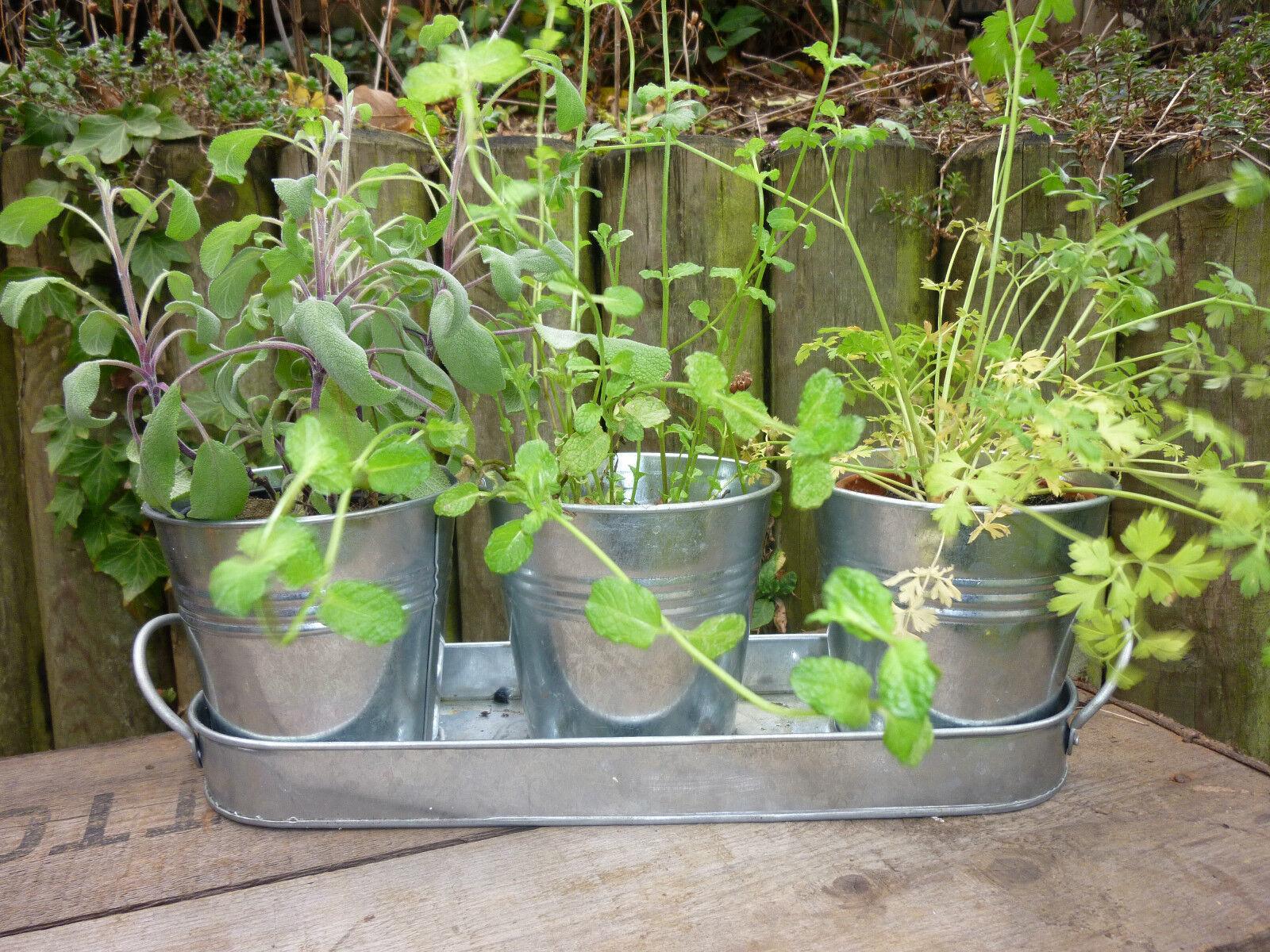 Lot de 3 Vintage Métal Jardin Plante Plant Pots de fleurs sur zinc plateau table de mariage