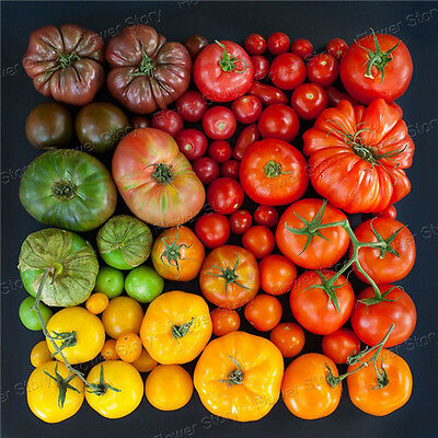 Impressive200 Mixed Beefsteak Tomato Seeds Heirloom Organic Vegetable Seeds 1