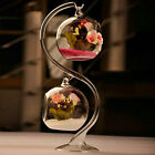 8cm Hanging Glass Flowers Plant Vase Stand Terrarium Container GD