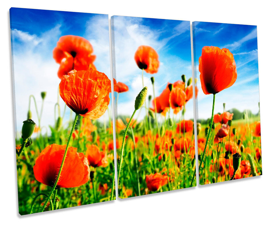 Poppy Floral Flowers Summer Field TREBLE CANVAS WALL ART Box Framed Picture
