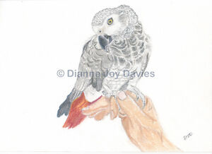 African-Grey-Parrot-Art-Print-A4-Giclee-Print-Birthday-Gift-Mothers-Day-Gift