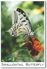Swallowtail Butterfly - NEW Animal Wildlife POSTER