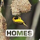 Picture This: Homes von Judith Nouvian (2015, Gebundene Ausgabe)