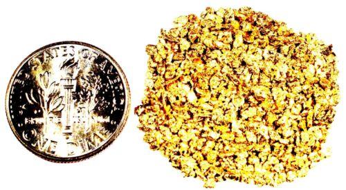 1.550 GRAMS ALASKAN YUKON BC NATURAL PURE GOLD NUGGETS #18 MESH FREE SHIPPING