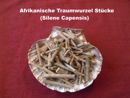 1g+5g Racine de Rêve Africaine Coupe Wurzelstück Silene Capensis Xhosa