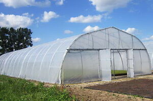 Greenhouse Plastic Clear 4 Year 6 Mil Poly Film Cover