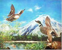 3d Lenticular Poster - Wild Ducks In The Lake - 8x10 Print