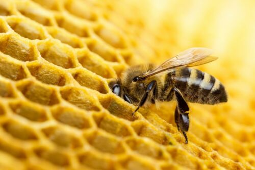 Bienenwachs direkt vom ImkerBienen Wachs BlockBayerwald-Imker