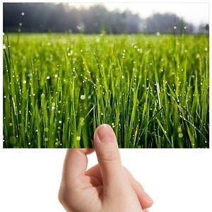 Morning-Dew-Grass-Small-Photograph-6-034-x-4-034-Art-Print-Photo-Nature-Gift-13063