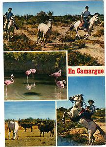 13-cpsm-En-Camargue