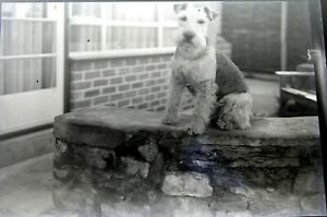 joblot-4-Antique-GLASS-Negative-vintage-dogs-pet-portraits-pooch-mutts-doggies