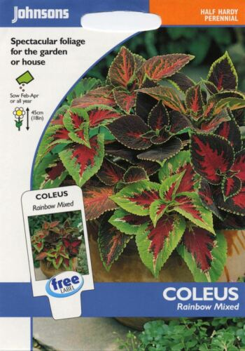 Flower 100 Seeds Johnsons Seeds Pictorial Pack Coleus Rainbow Mixed