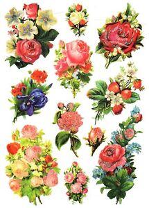 IMMAGINI-Lucide-danese-repro-bogen-11-fiori-BEL-prua-amp-Glimmer