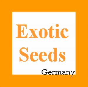 Lagerstroemia-thorelii-Lagerstroemie-Queen-039-s-Flower-30-500-Samen