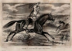 America-Chasse-in-Ostrich-Dans-Les-Pampas-Engraving-Original-19th