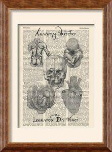 Art Print - Leonardo Da Vinci - Anatomy Sketches on Antique Book ...