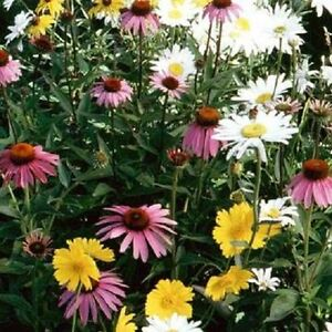1-000-Wildflower-Seeds-Annual-Part-Shade-Wildflower-Mix-Flower-Seed-Mix