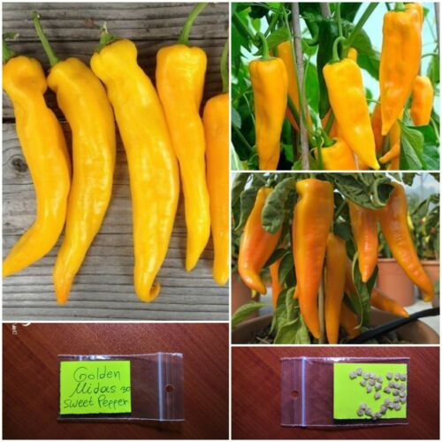 Details about  /Greek Traditional Sweet Pepper /'/'Golden Midas/'/' ~30 Top Quality Seeds MEGA RARE