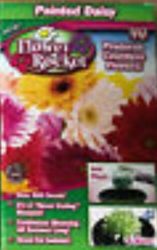 Flower Rocket AS SEEN ON TV Painted Daisy OR Fragrance Bouquet ~ Offer $15 for 2