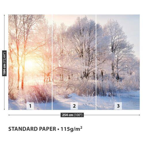 Papier-papier peint papiers peints Photos Papier Peint de Papier poster photo arbres hiver