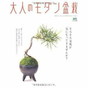 Adult-of-modern-bonsai-Eimukku-1809