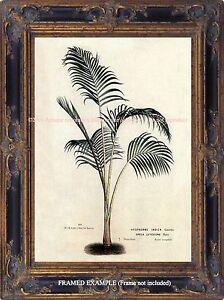 Image Is Loading Antique Botanical Ilration Palm Tree Tropical Decor Hawaii