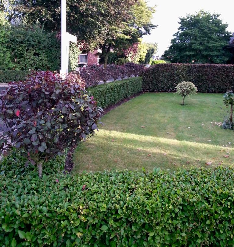 Liguster atro. 150st. 70-100cm  Heckenpflanzen % Super Sale %