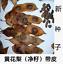 100pc Dalbergia odorifera huang hua li seed scented rosewood for plant D.hainane