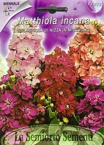 Seeds AGERATO Miscuglio 150 Semi