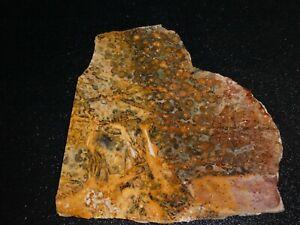 Leopard-Skin-Jasper-slab-5-3-4-034-x-5-3-4-034-rough-for-cabbing-display
