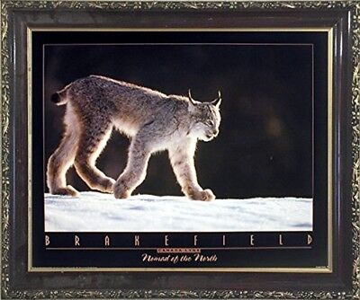 Wall Decor Timber Wolves In Snow Tom Brakefield Wildlife Animal Nature Art 16x20