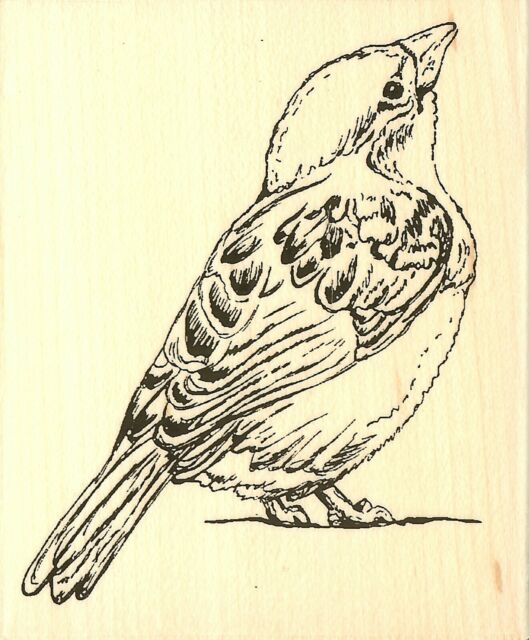 BIRD Gazing Bird Wood Mounted Rubber Stamp Impression Obsession D16448 New