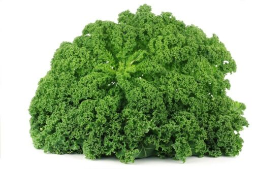 """Kale /""""Cadet/"""" tall with strongly curled leaves 600 seeds"""
