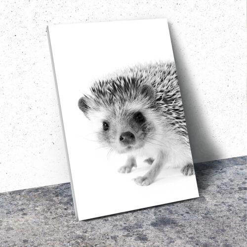A359 Black White Animal Portrait Canvas Picture Print Wall Art Hedgehog Cute