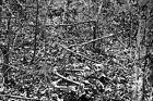 New 5x7 Civil War Photo: Bones on Orange Plank Road, Battle of the Wilderness