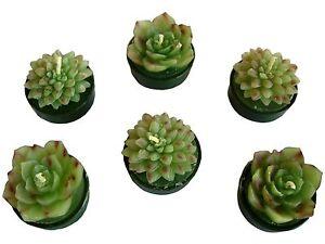 6er-Set-sehr-schoene-Kaktusteelichter-2-versch-Motive-in-Klarsichtverpackung
