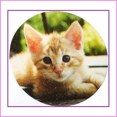 Cat Stickers - Help Cape Atlantic C.A.T.S. Charity >^^<