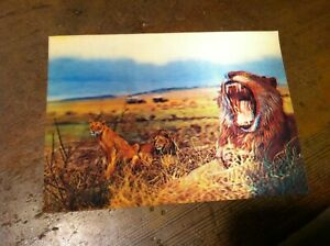 OLD-3D-LIONS-POST-CARD-20-227