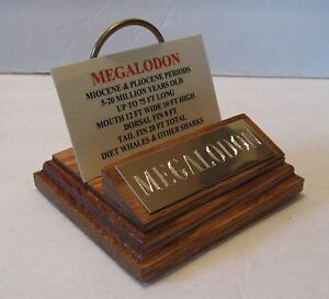 "NICE MEGALODON SHARK TOOTH TEETH 4"" FOSSIL DISPLAY STAND Tooth Not Included"