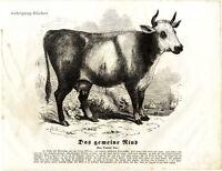 The Cow, 1841 Original Antique Wood Engraving.