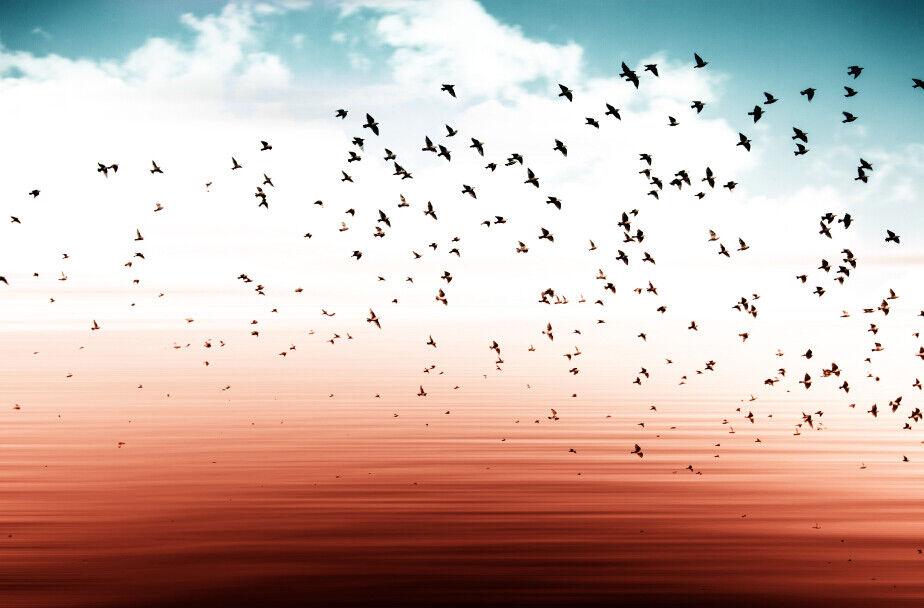 3D Sky Desert Desert Desert Birds 8 Wall Paper Murals Wall Print Wall Wallpaper Mural AU Lemon fbd73b