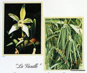 Juste Yt 351 La Vanille Tahiti PolynÉsie FranÇaise Fdc 1° Jour