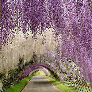 Details About Kq Artificial Silk Flower Garland Vine Wisteria Leaf Hanging Wedding Decor Litt