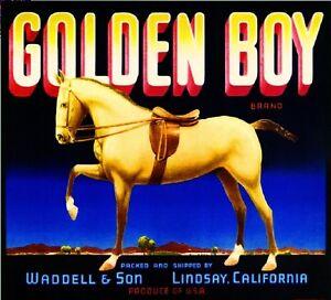 Lindsay Tulare County Golden Boy Horse Orange Citrus Fruit Crate Label Art Print