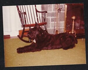Enjoyable Details About Vintage Photograph Cute Puppy Dog Laying By Rocking Chair Fireplace Frankydiablos Diy Chair Ideas Frankydiabloscom