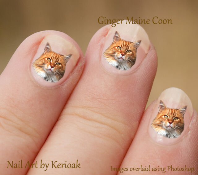 Ginger Maine Coon 24 Unique Designer Cat Nail Art Stickers Decals