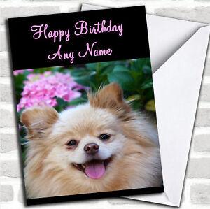Pomeranian Dog Personalized Birthday Card Ebay
